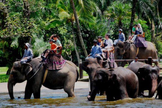 wisata satwa di bali dengan naik gajah